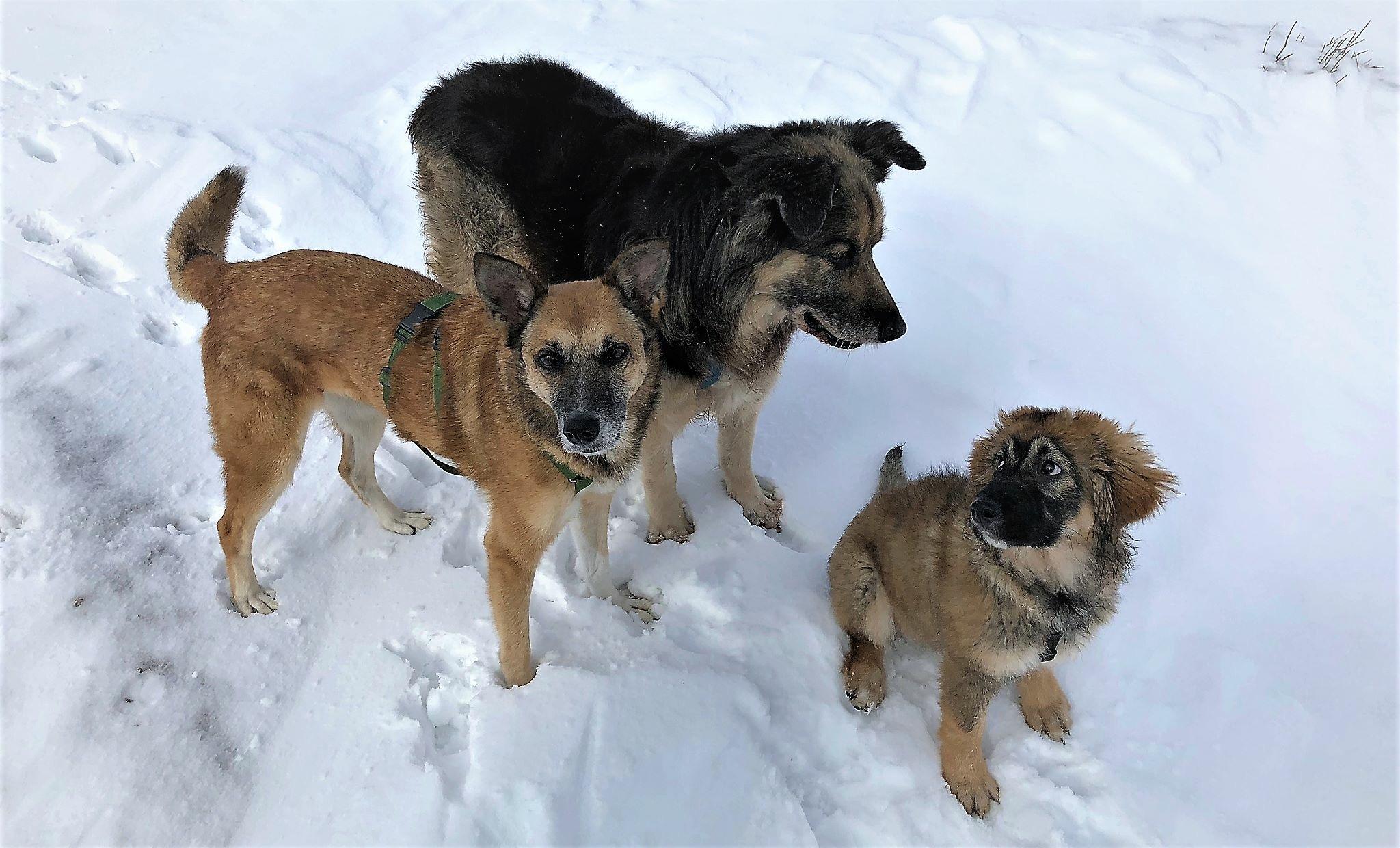 I tre cani sulla neve