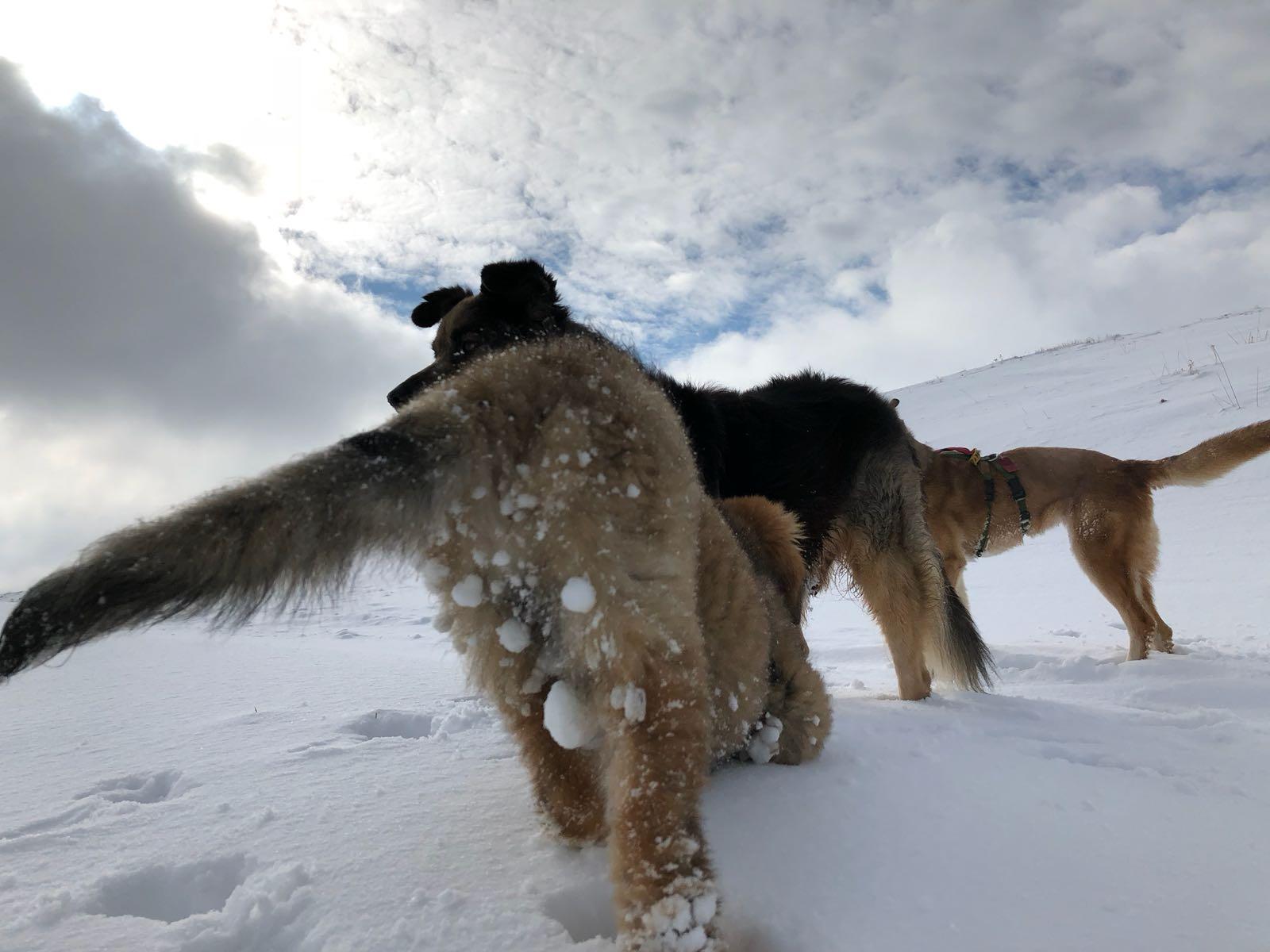 Concetta e la neve