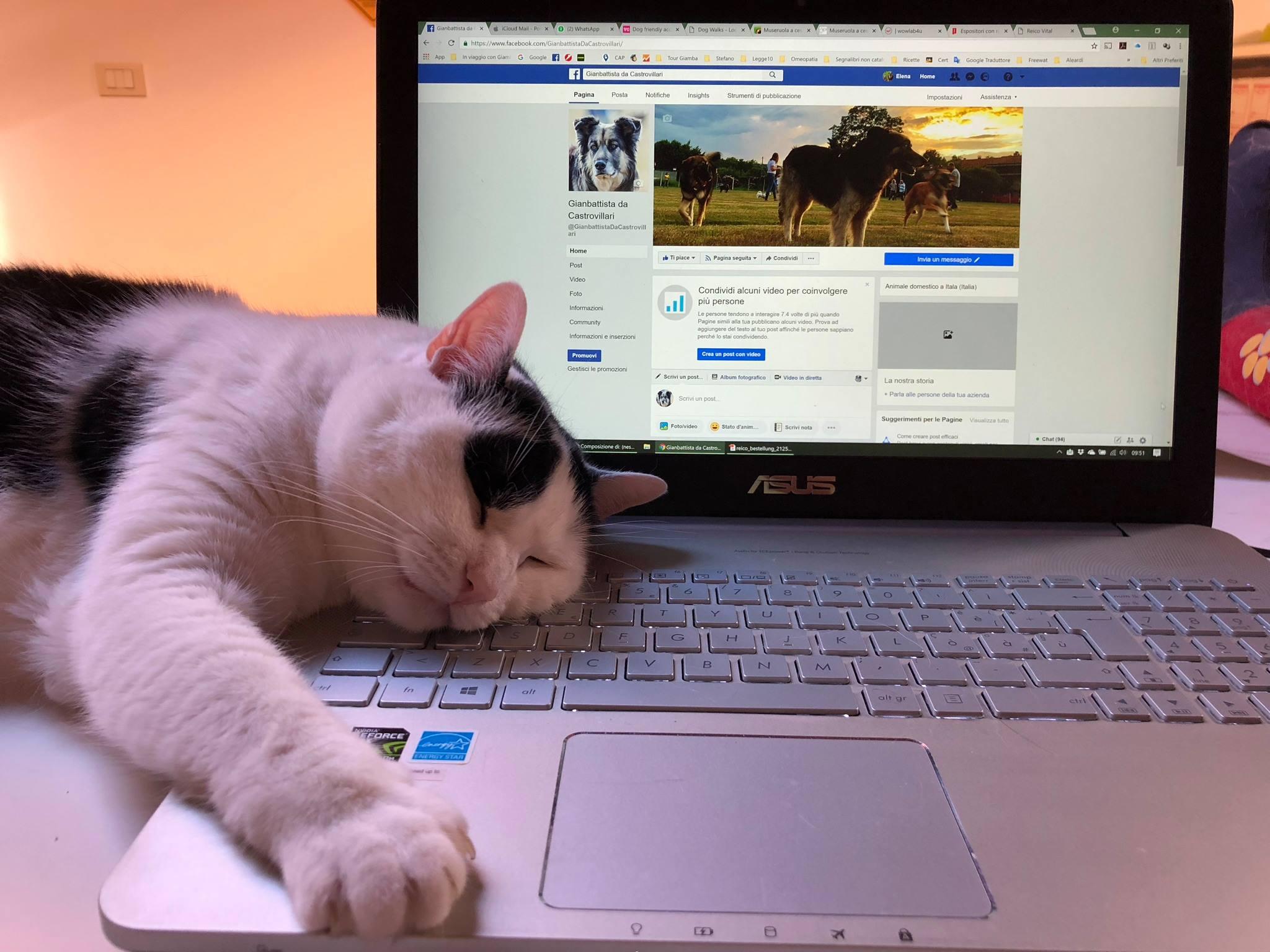 Anita sul computer