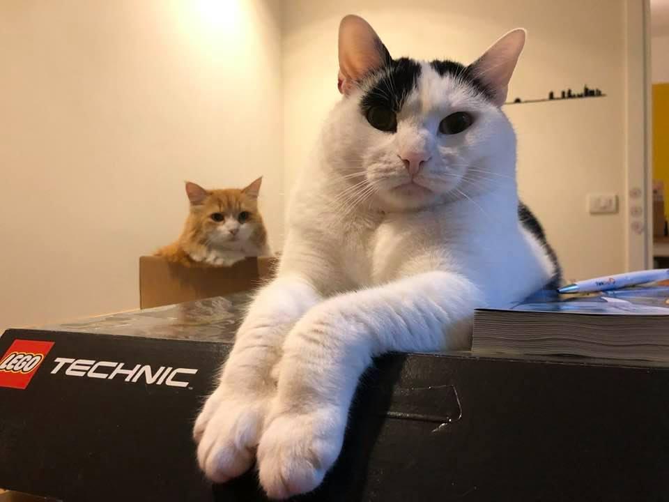 Anita sulla scatola con Ginger