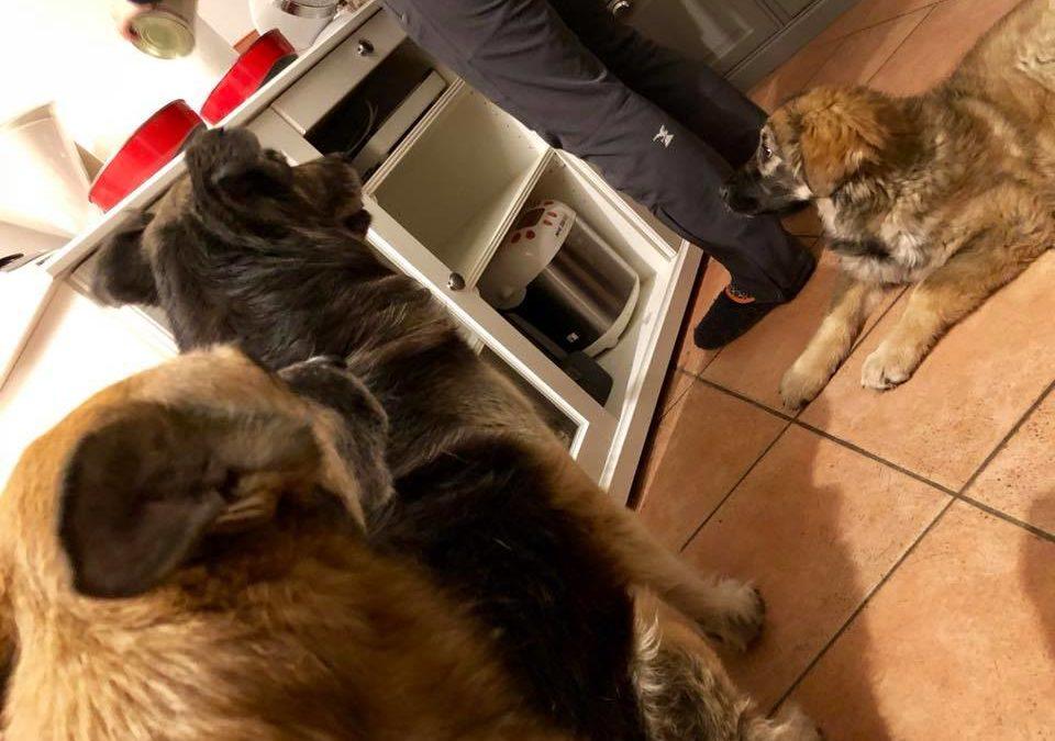 Tre cani rispettano il rituale della preparazione del cibo