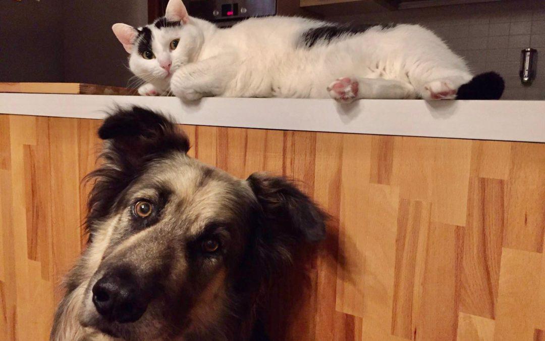 Come cane e gatto
