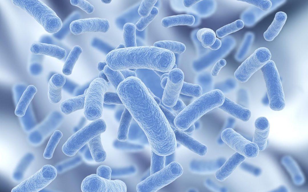 Microbioma: siamo ciò che mangiamo