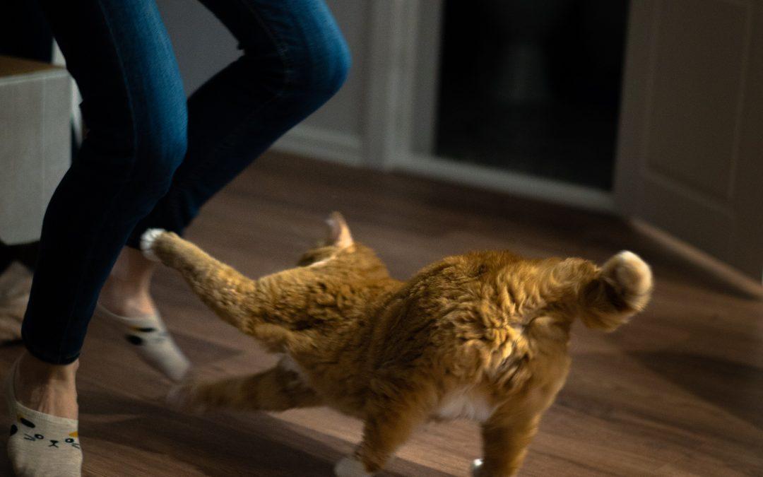 Quattro comportamenti istintivi dei felini