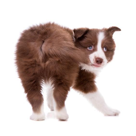 E' il cane ad avere problemi… O siamo noi?